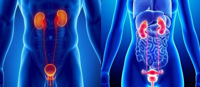visite specialistiche urologia